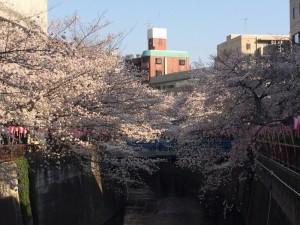 2015春 池